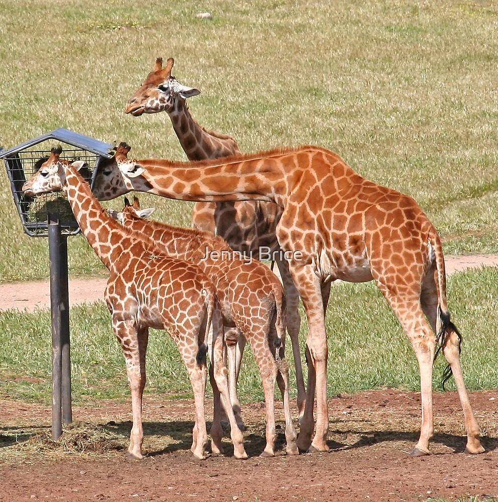 Giraffes Feeding by Jenny Brice