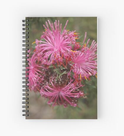 Isopogon formosus Spiral Notebook