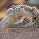 I have an eye on you by Kathryn Potempski