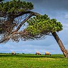 Aussie Landscape  by Kathryn Potempski