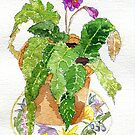 Potted house plant by rosie320d