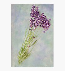 Lavender flowers Photographic Print