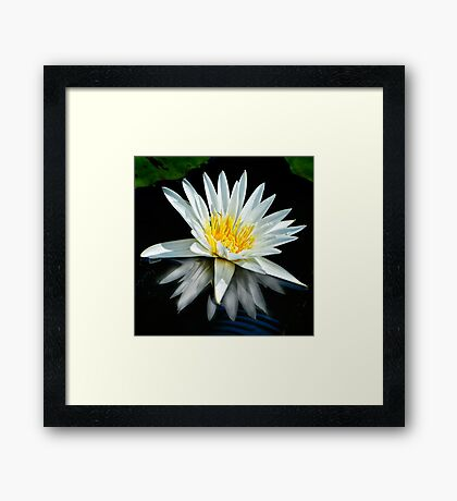 White Water Lily and Reflection Framed Print