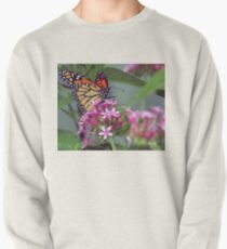 Monarch in pink ixora Pullover