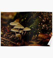 The Fungi family Poster