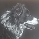 Collie by Ally Tate