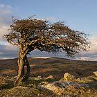 Einsamer Baum auf Dartmoor von peteton
