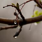 Left-Over Rain Drops by rumimume