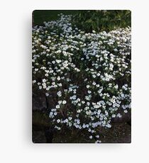my garden: aesthetic flora Canvas Print