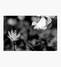 Macro Flower Black and White Photographic Print