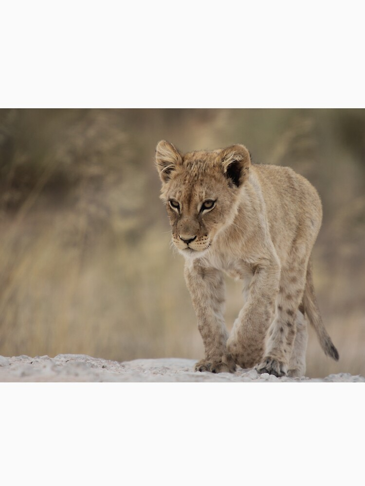 Lion cub with attitude by AdelevS19