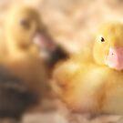 Duckling by Shelley Neff