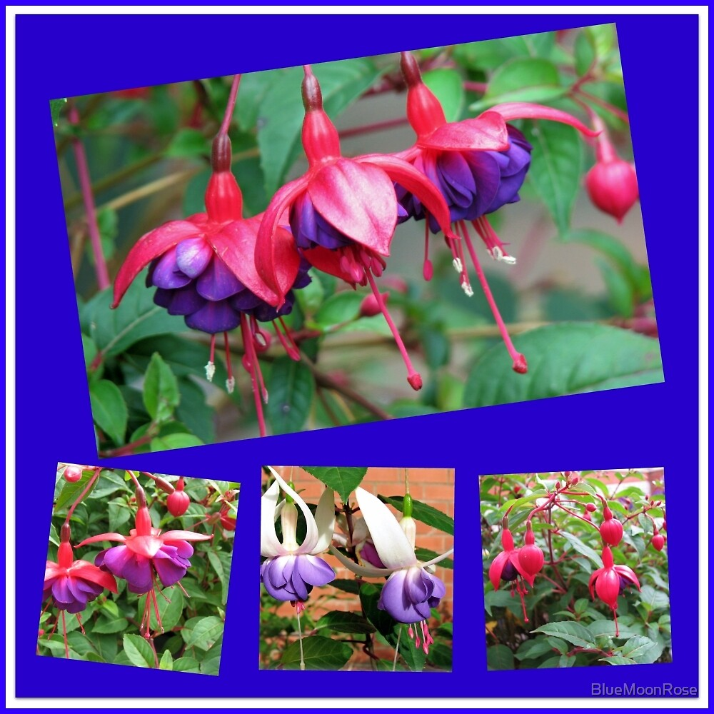 Dancing Fuchsia Belles - Summer Flowers Collage by BlueMoonRose