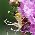 Busy little Native Bee by Jenelle  Irvine