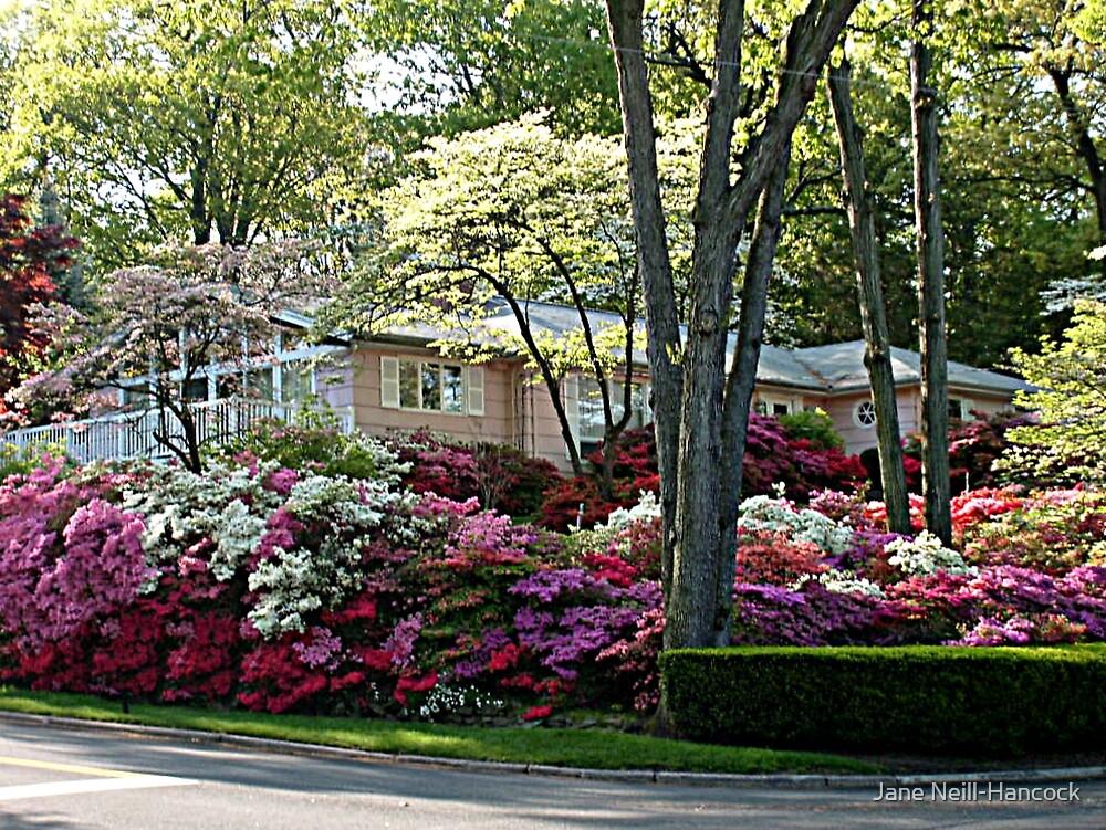 The Azalea House and Gardens by Jane Neill-Hancock