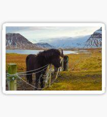 Islandpferde, Grundarfjordur, Snaefellsnes, Island Sticker