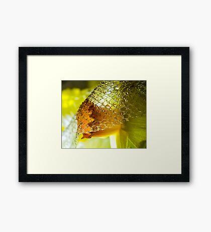The Demure Daffodil Framed Print