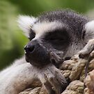 Shhhh I'm sleeping by Sharon Kavanagh