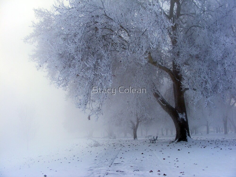 Beautifuly Cold by Stacy Colean