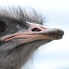 ostrich obsession by Georgie Hart