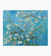 1890-Vincent van Gogh-Almond blossom-73.5x92 Photographic Print