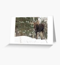 Bull moose in winter Greeting Card