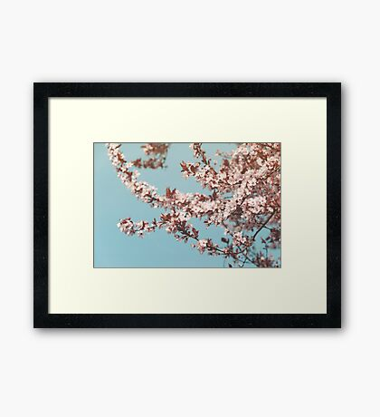 Flowering Cherrytree Framed Print