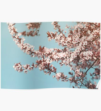 Flowering Cherrytree Poster