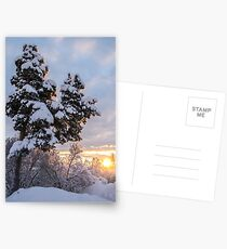 Hometree in Finland Postcards
