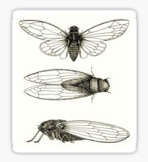 3 sepia Cicadas Sticker