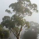 Foggy Morning in Edenhope, West Wimmera by Diana-Lee Saville