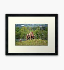 European Bison in fota wildlife park Framed Print