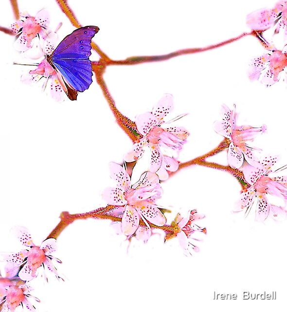 Blossom and Butterfly by Irene  Burdell