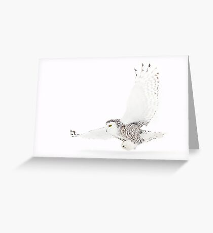 A snowy owl lands Greeting Card