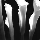 Calla Lilies by Terri~Lynn Bealle