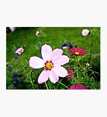 Kissed By Cosmos Photographic Print