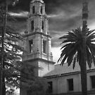 Bell Tower And Palms by Chet  King