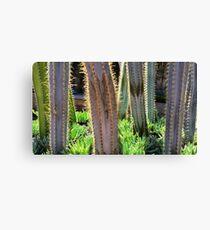 Glowing Cactus Canvas Print