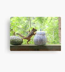 Squirrel and Cookie Jar Metal Print
