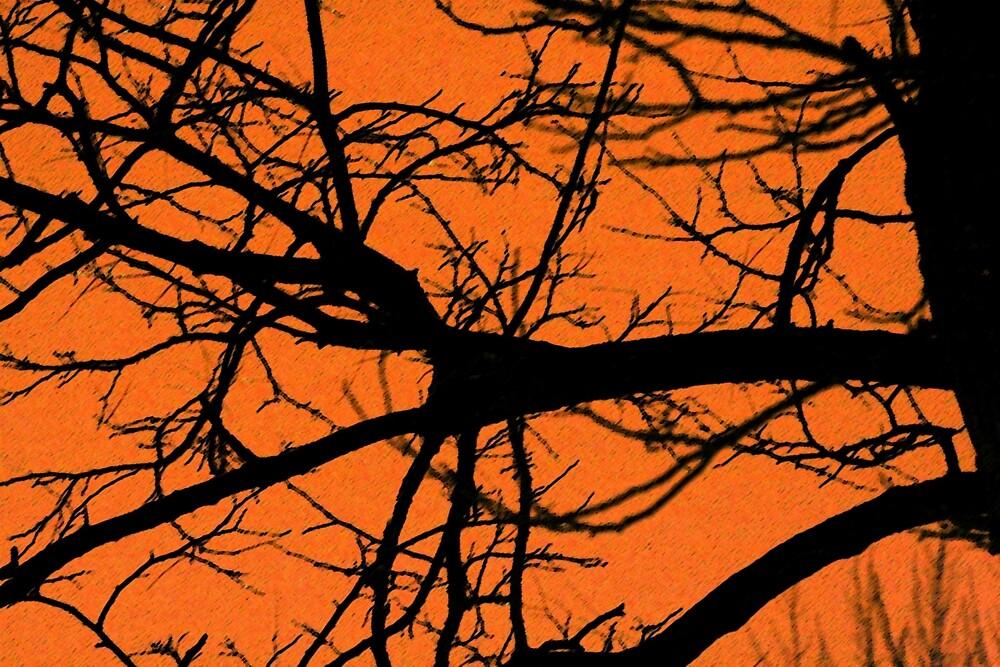Night Sky Images by Sheri Ann Richerson