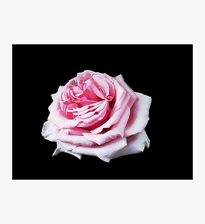 Dreamy Rose Photographic Print