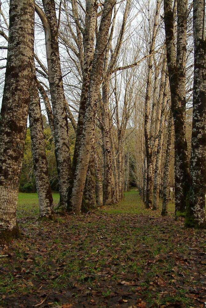 Joe Mortelliti Gallery - Dando's Camp, Otways Forest, Victoria, Australia. by thisisaustralia