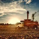Case Harvest by Steve Baird
