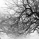 12.3.2016: Leafless Apple Trees by Petri Volanen