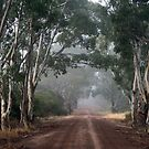 RedGums, Edenhope, Victoria by Diana-Lee Saville