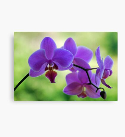 Purple orchid in green environment Canvas Print