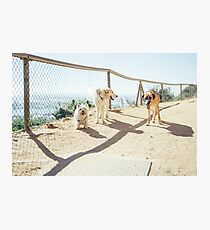 Dog Pack Photographic Print