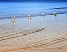 In Line for the Next Wave - Seagulls by Yannik Hay
