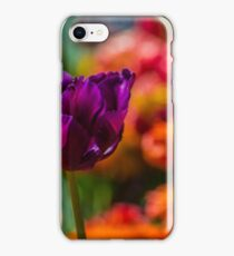 Magenta Tulip 1 iPhone Case/Skin