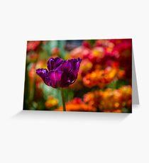 Magenta Tulip 1 Greeting Card